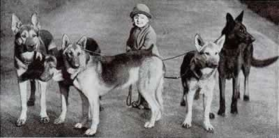 BIG old fashioned german shepherds
