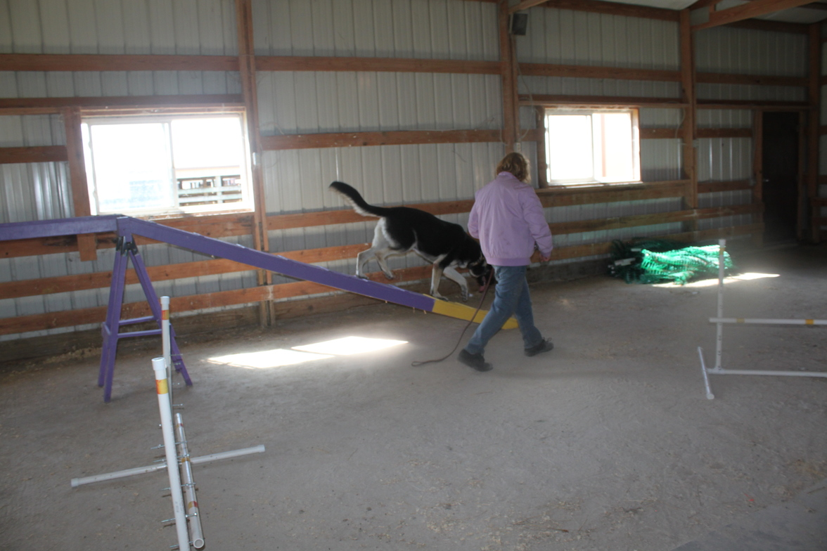 x- large german shepherds can do agility